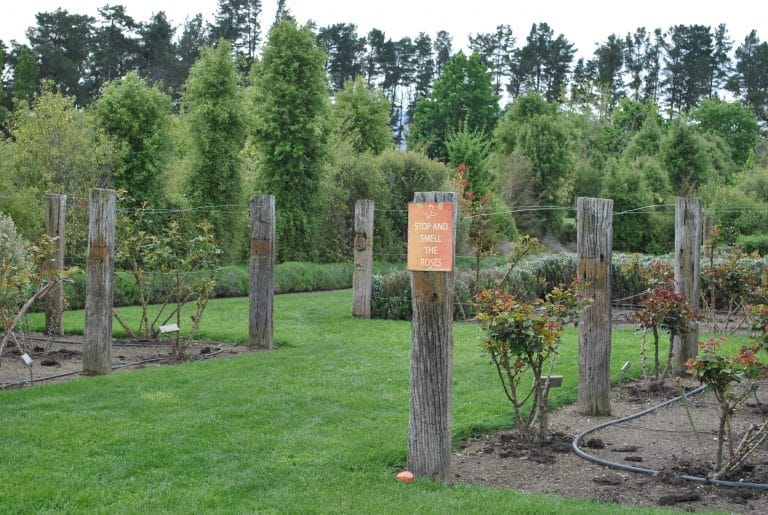 hardwood posts among rose garden with sign